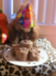 Poodle Birthday