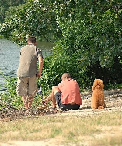 poodle fishing companion
