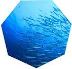 해양 콜라겐.jpg