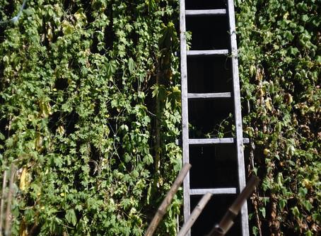 Servitude du tour d'échelle : Droit de passage chez votre voisin pour l'entretien de votre propriété