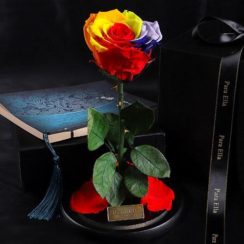 大自然系列 - 單支進口保鮮玫瑰 (彩虹)