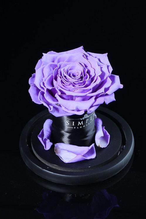 10cm 進口保鮮大玫瑰 (紫)