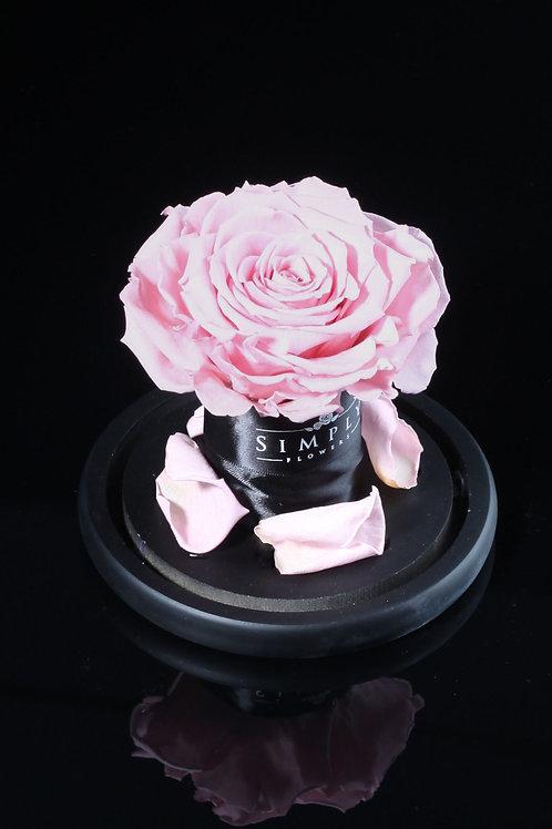 10cm 進口保鮮大玫瑰  (淺粉紅)
