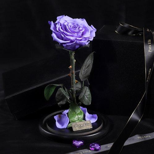 大自然系列 - 單支進口保鮮玫瑰 (紫)