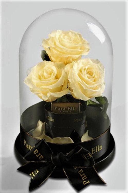 3朵淡白進口保鮮玫瑰