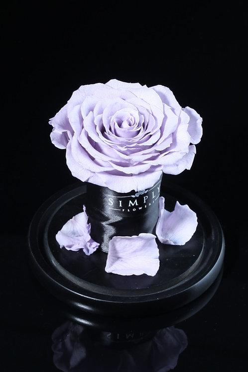 10cm 進口保鮮大玫瑰 (淡紫)