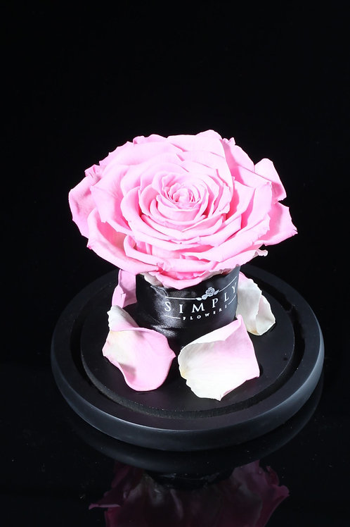 10cm 進口保鮮大玫瑰 (粉紅)