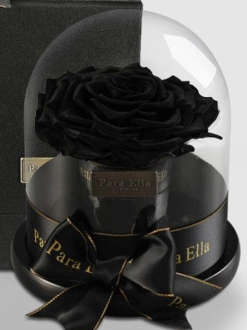 10cm 進口保鮮大玫瑰 (黑)