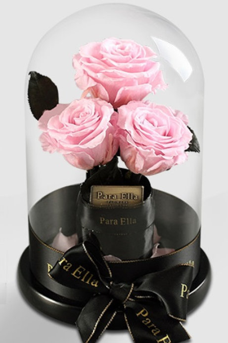 3朵淺粉進口保鮮玫瑰