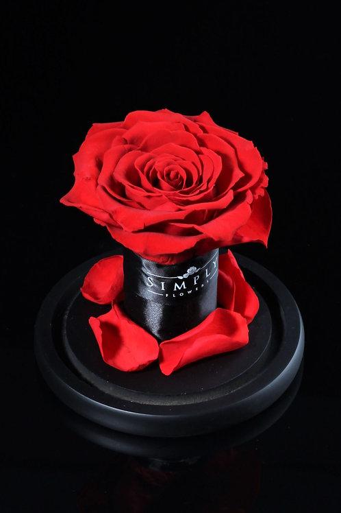 10cm 進口保鮮大玫瑰 (紅)