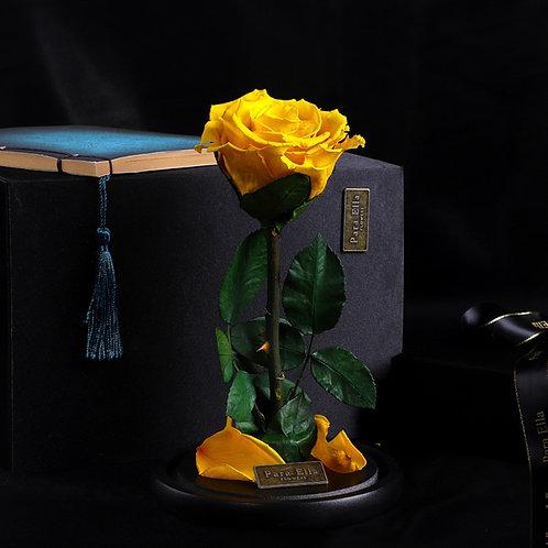 大自然系列 - 單支進口保鮮玫瑰 (黃)