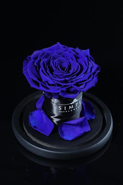 10cm 進口保鮮大玫瑰 (藍)