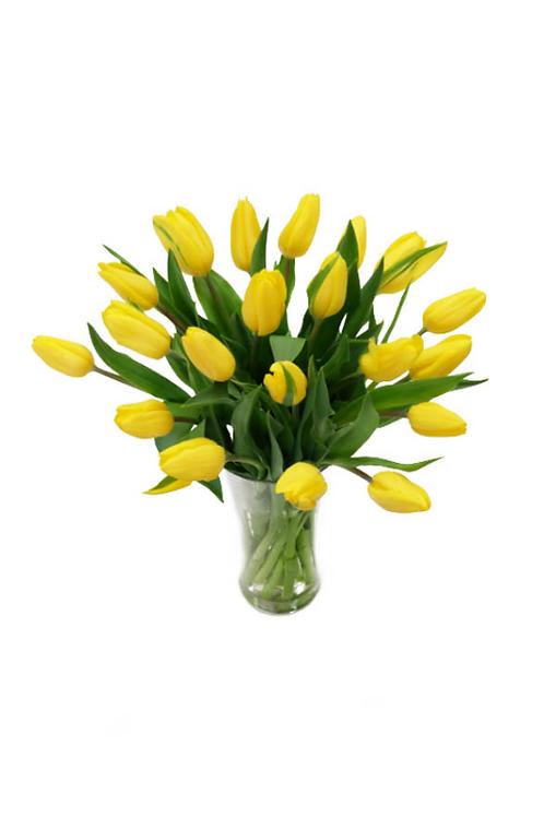 黃色鬱金香 連花瓶