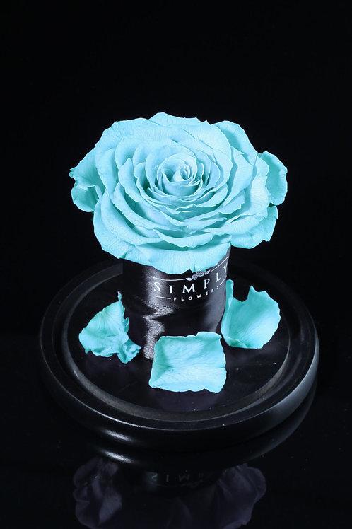 10cm 進口保鮮大玫瑰 (淺藍)