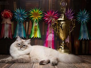 """Международная выставка Клуба Любителей Кошек """"Felicity"""" 20 - 21 мая 2017."""
