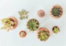 assorted%20succulents%20in%20clay%20pots