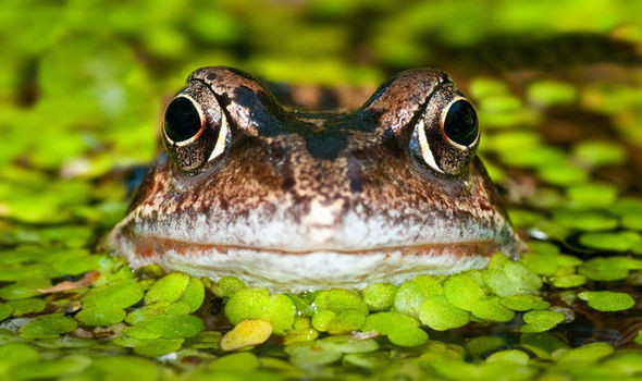 frog in pond, green leafy plants