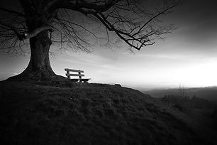 tree-753069_1280.jpg