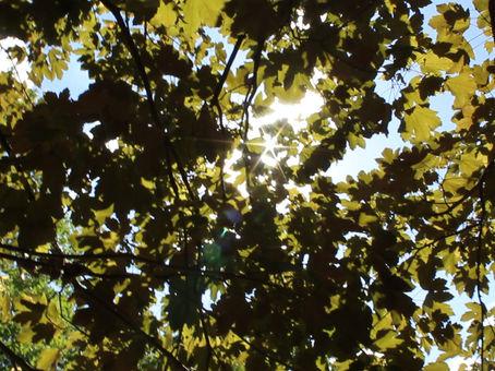 Kaleidofoliage