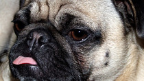 Making your PUGs behave