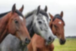 horse-rescue-list.jpg