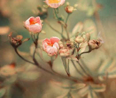 flower blessing