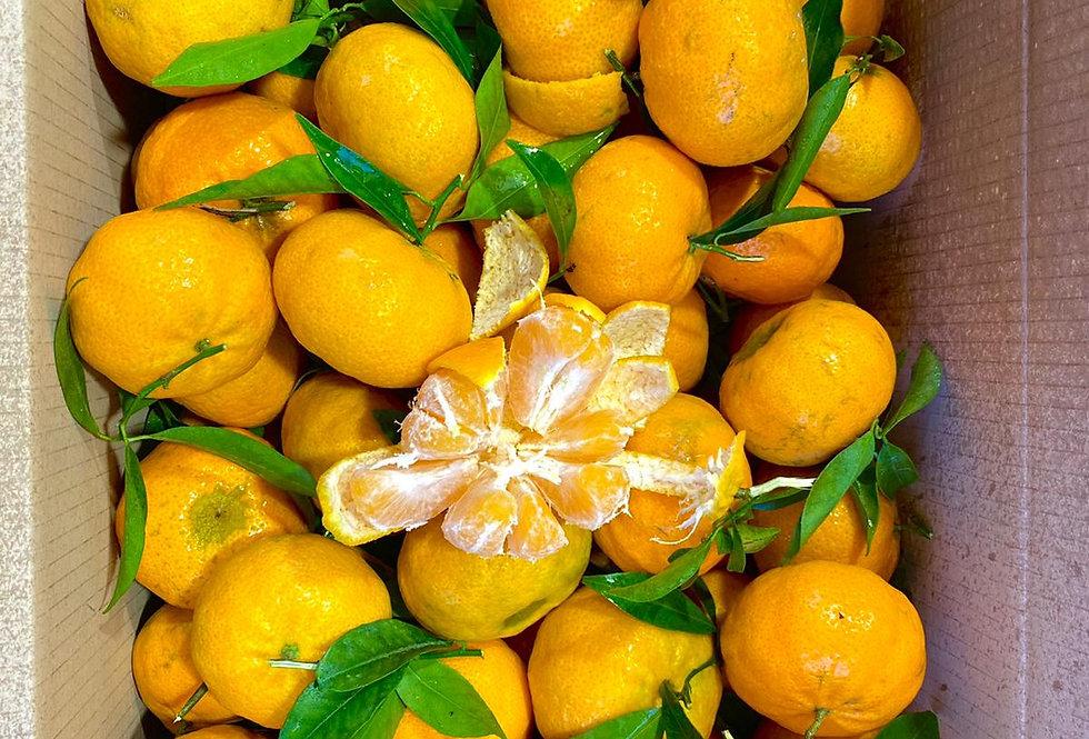"""MANDARINKA Clementine Siciliane 1kg  """"TAK SLADKÉ, ŽE NEDOKÁŽEŠ PŘESTAT!"""""""