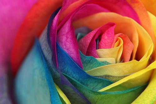 rainbow hands Cake Expectations.jpg