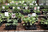 Veggies and Herbs.jpg