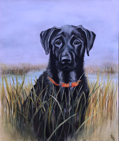 Black Lab Portrait of Colby