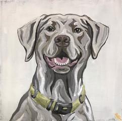 Silver Lab Portrait