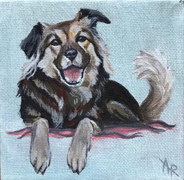 Small Dog Portrait