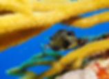 pez cozumel Mexico
