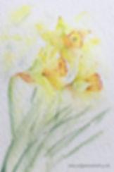 Sunshine Daffodils Watercolour