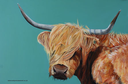 HIghland Cow Teal Backlground