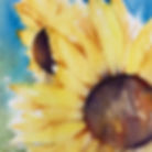 Sunflower2@2x.jpg