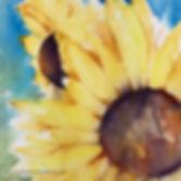 Sunflower2@2x.jpg
