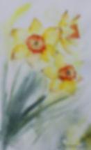 Dancing Daffodils Watercolour