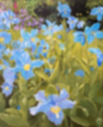 Sharon's Blue Poppies.jpg