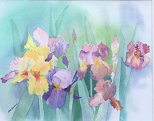 Field of Iris 2