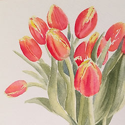 Red Tulips Watercolour