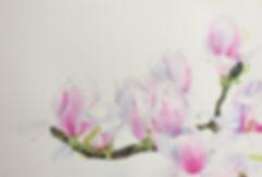 Central Park Magnolias.jpg