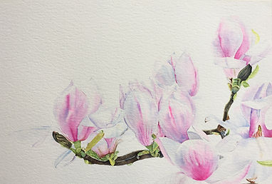 Central Park Magnolias