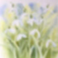 Castlebank Snowdrops 2.jpg
