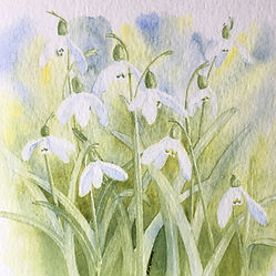 Castlebank Snowdrops Watercolour