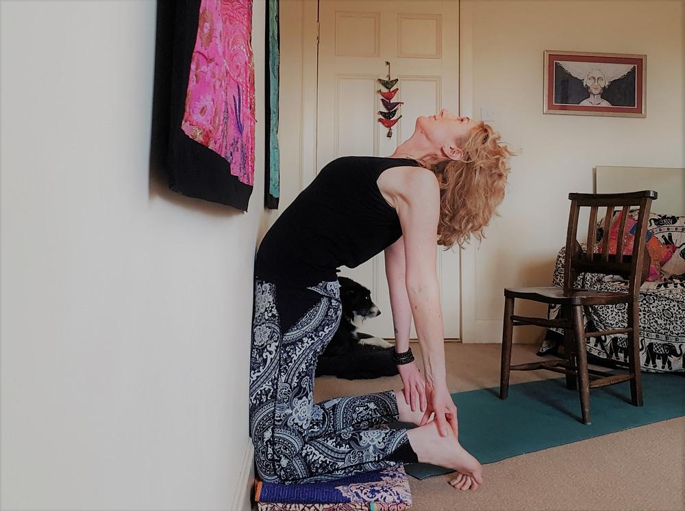 Ustrasana against a wall, Berwick & Borders Yoga