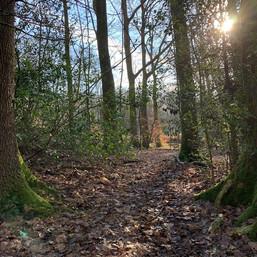 Charity Farm Woods