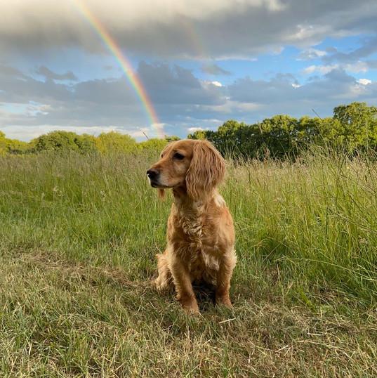 pixie and rainbow.JPG