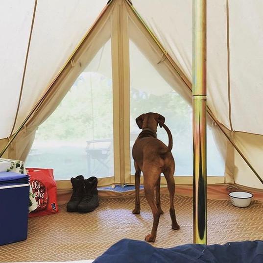 GP dog in bell tent.jpg