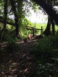 Charity Farm Footpath